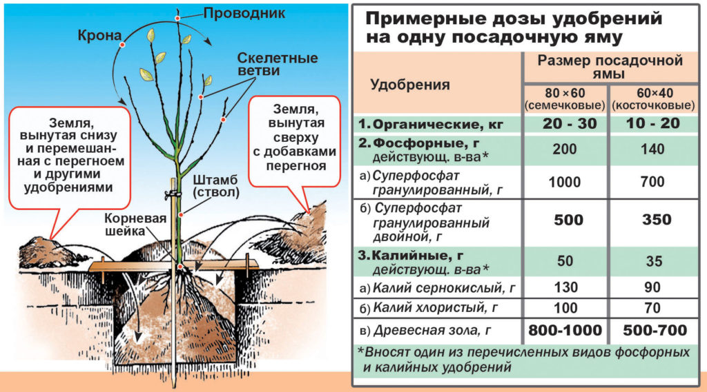 подкормка садовых деревьев и кустарников летом