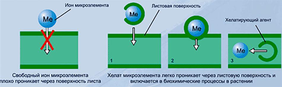 Удобрение Гуми: виды, инструкция по применению, состав и польза для растений