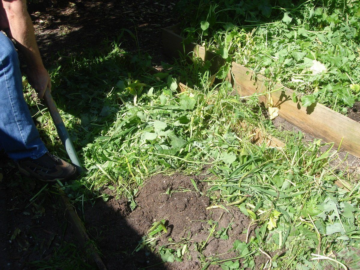 посев горчицы для удобрения почвы осенью