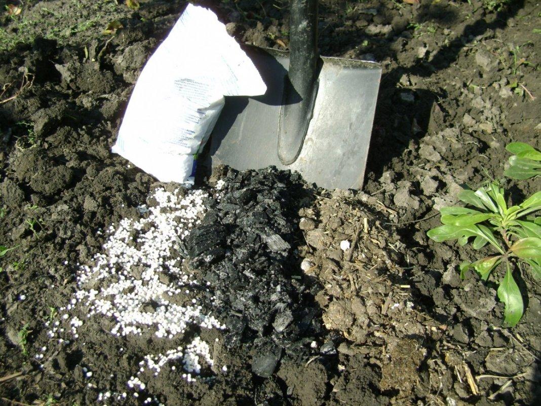 Удобрение калийная соль – предназначение, целесообразность использования на разных типах почв