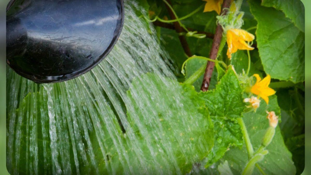 Кристалон – удобрение, позволяющее экономить на подкормках. Инструкция по применению