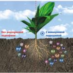 Внекорневая подкормка: дозировки удобрений и полезные рекомендации