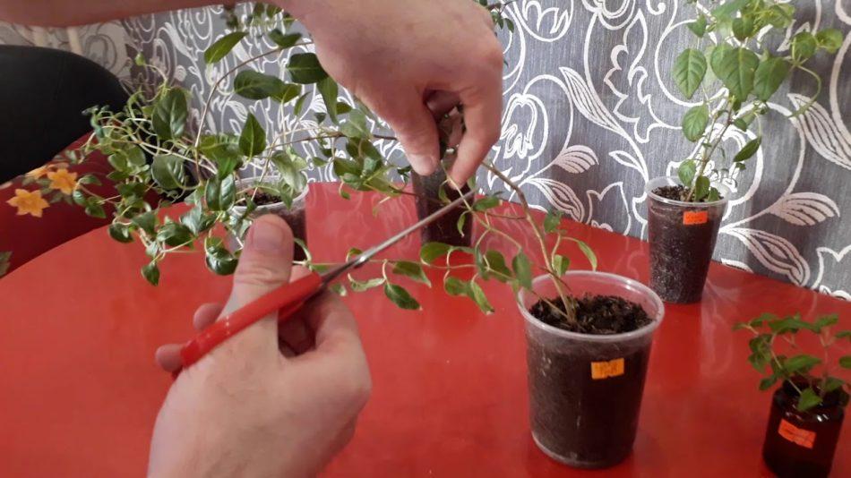 Горчица – растение для зеленого удобрения: полезные свойства, нужно ли ухаживать, способы применения