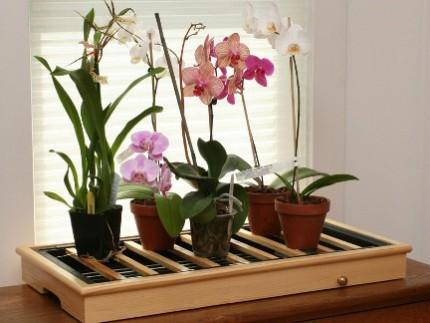 Как развести орхидею в домашних условиях: способы и рекомендации