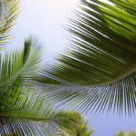 Пальма домашняя – виды с описанием и фото. Как выбрать растение для декора. Условия роста – освещение, полив, подкормки