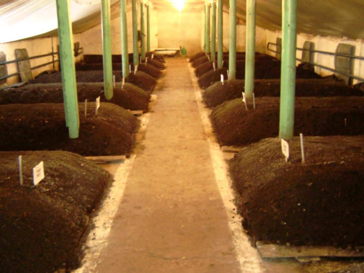 Чем подкармливать червей в домашних условиях и на ферме по производству вермикомпоста
