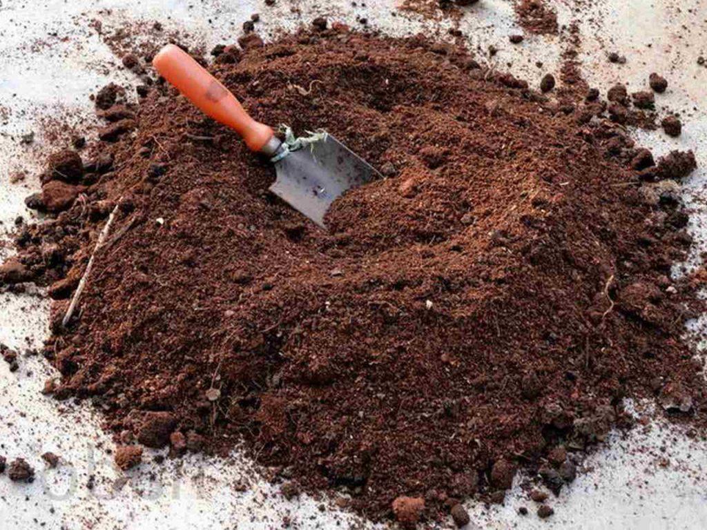 Чем подкормить гортензию – комплекс минералов для роста зелени и цветения. Органические и минеральные подкормки