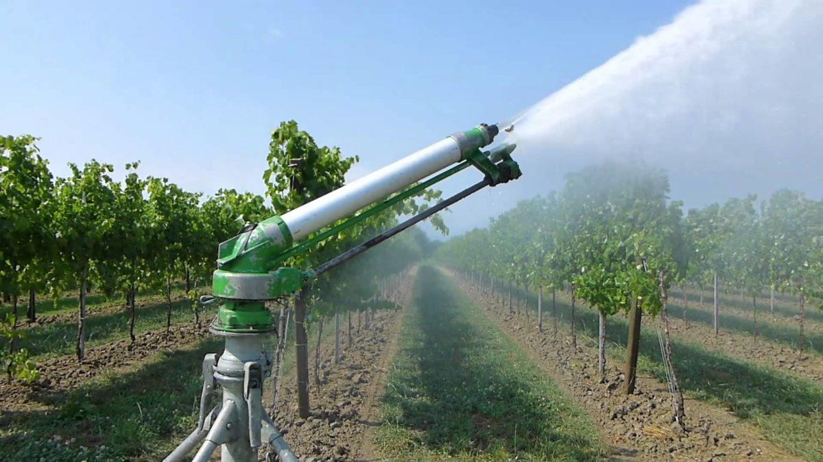 нужно ли поливать виноград осенью