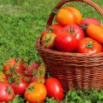 Калийные удобрения для томатов: календарь подкормок, какие лучше использовать