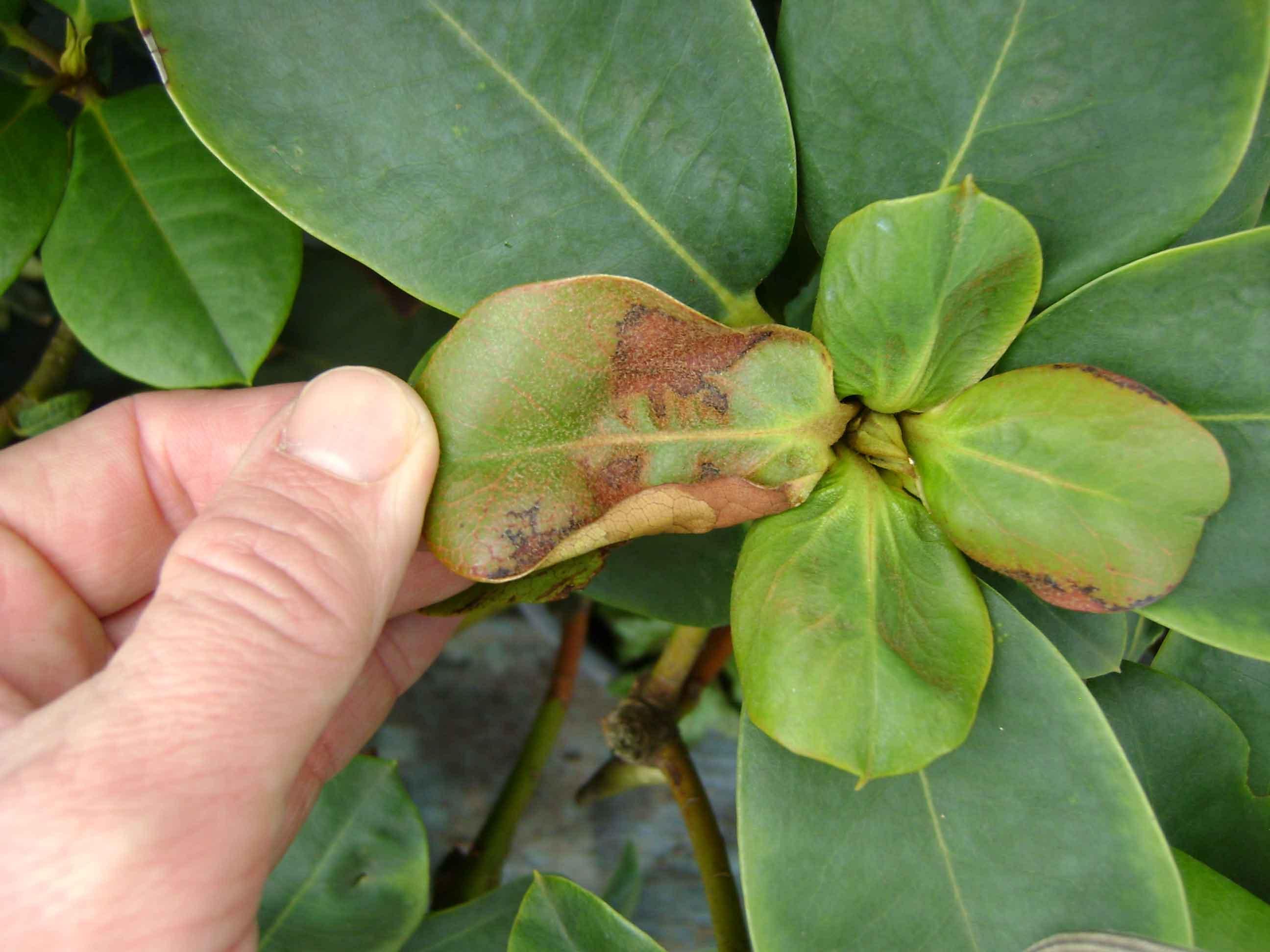 Удобрение Феровит: инструкция по применению для растений
