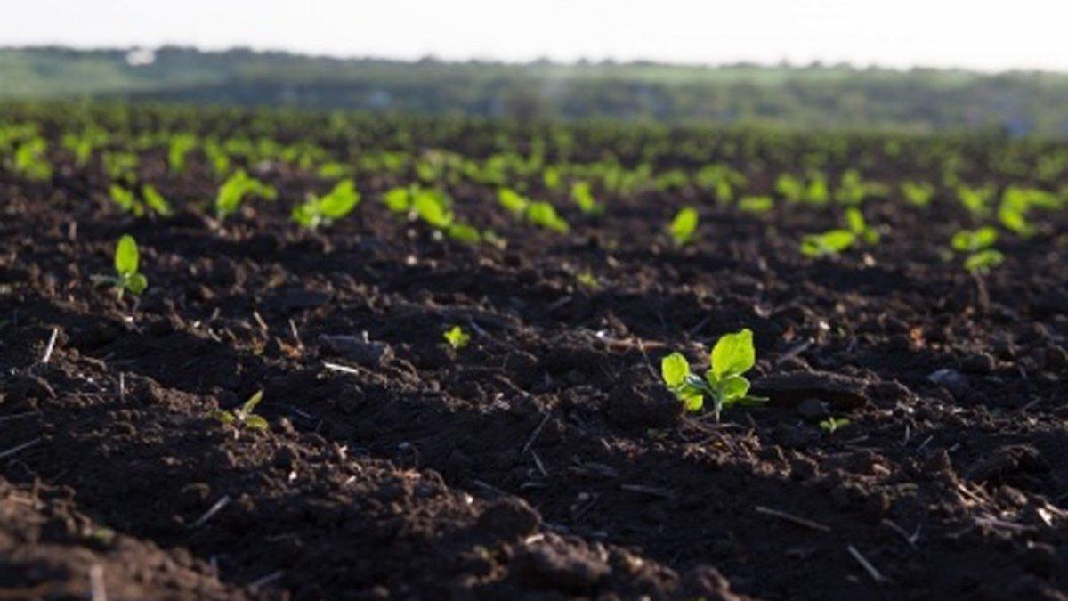 Рост концентрат – инструкция для огородников, преимущества удобрения, способы внесения и дозировки препарата