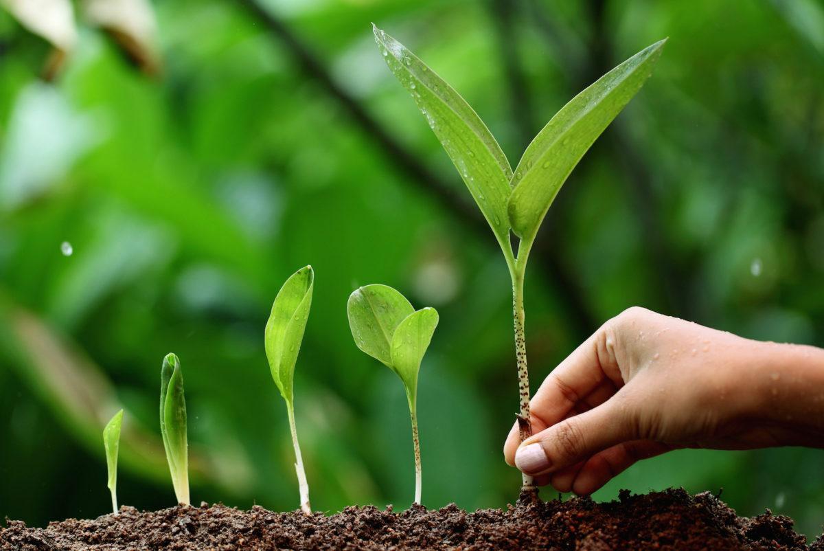Стимуляторы и регуляторы роста – залог быстрого развития растений