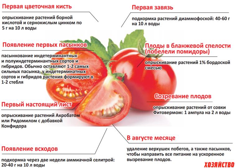 схема удобрения помидор