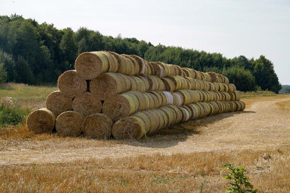 Солома как удобрение на огороде – польза или вред, способы использования