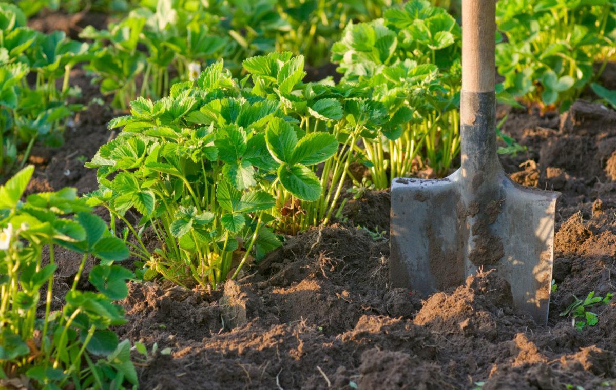 «Биоклад» – натуральное удобрение нового поколения