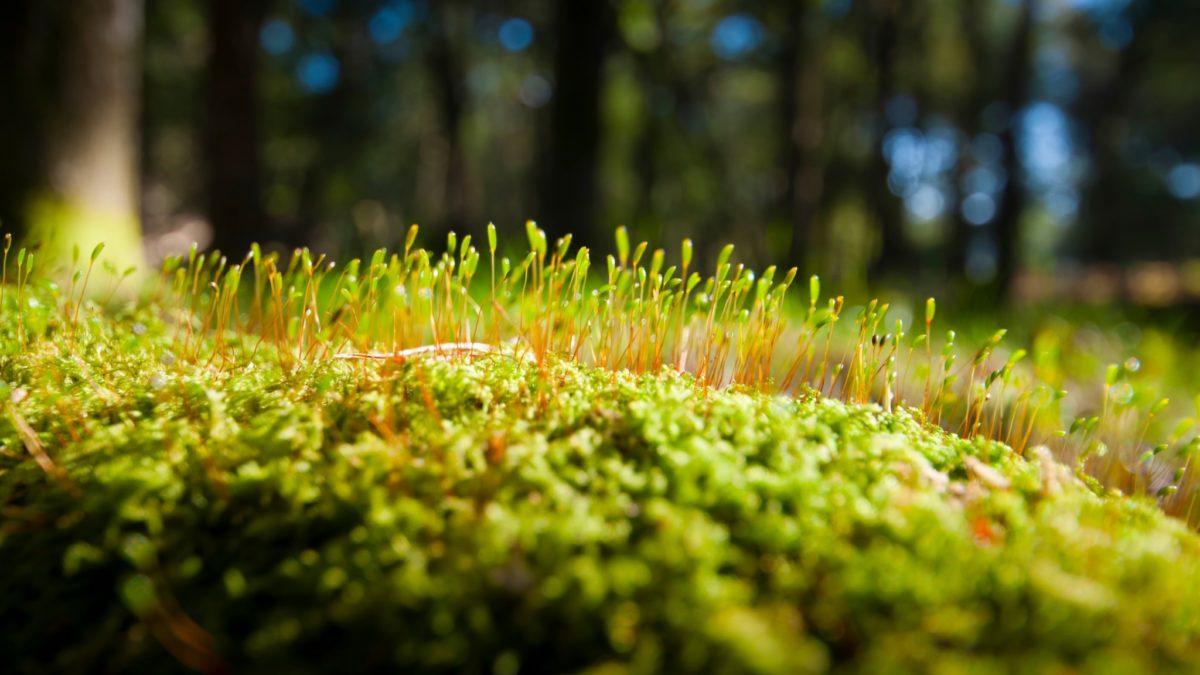 подкормка газона летом