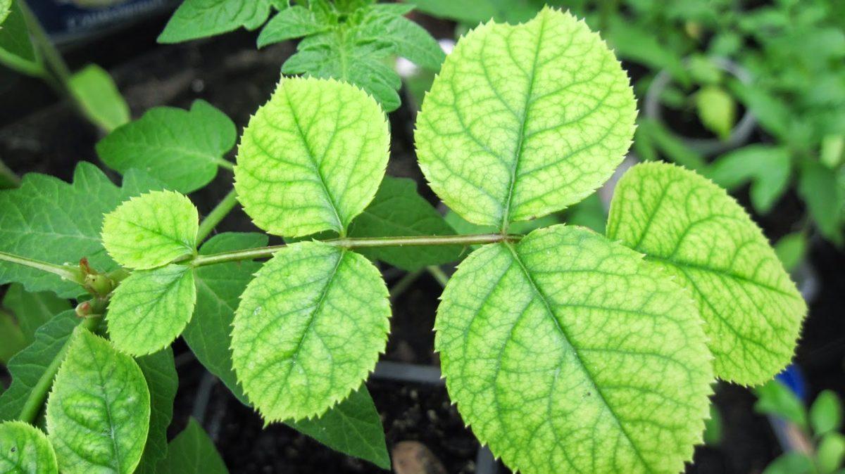 в чем содержится азот для подкормки растений