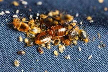 Уничтожение тараканов своими силами: варианты борьбы с вредными насикомыми