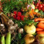 Хелатные удобрения: чем отличаются от солевых форм, польза и применение для растений