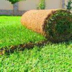 Рулонный газон для придомовой территории – практичное решение