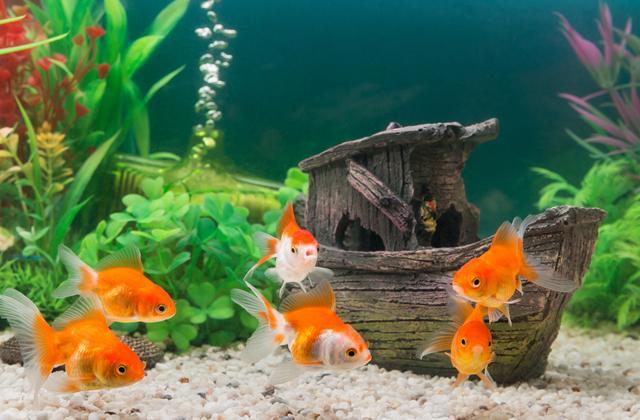 Аквариумные рыбки – то, что нравится каждому