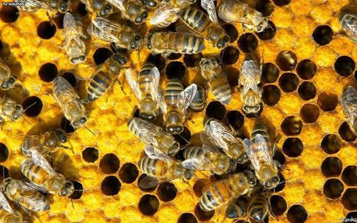 Что нужно для занятия пчеловодством