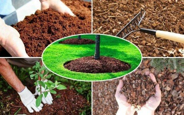 Особенности выбора удобрений для сада, огорода