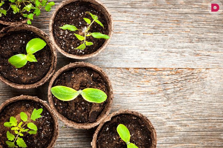 Как правильно выращивать растения