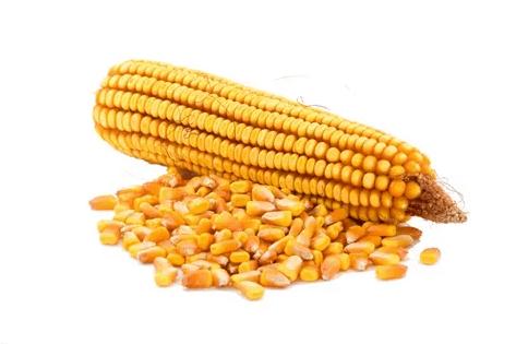 Семена кукурузы оптом — в интернет-магазине