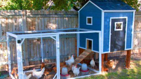 Как утеплить постройку для содержания птицы и животных