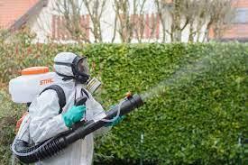 Особенности профессиональной очистки участка от комаров