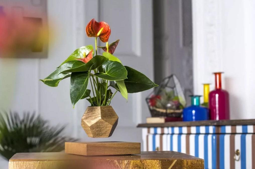 Живописные акценты: какие цветы украсят интерьер и принесут пользу
