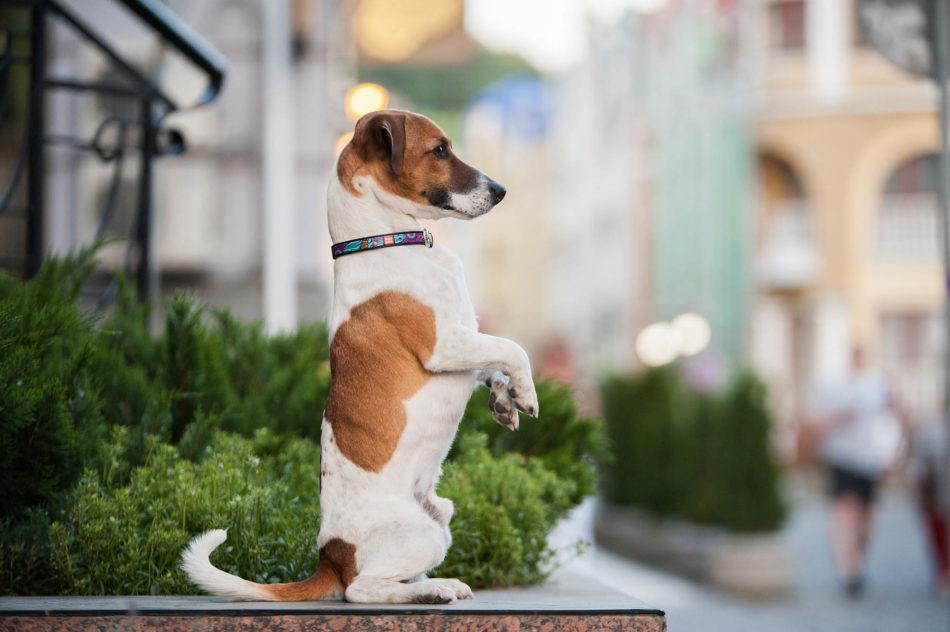 Популярные собаки для охоты в современном мире