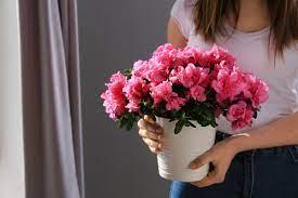 Какие цветы лучше: срезанные или в горшках